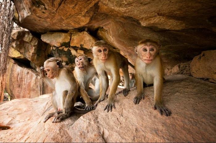 monkey-kingdom-Castle-Rock