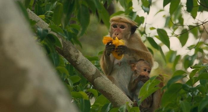 monkey-kingdom-Maya-&-Kip