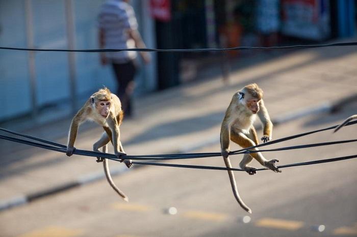 monkey-kingdom-toque-macaques-trope-adventure