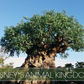 Disney's-Animal-Kingdom-Miami-Mommy-Savings