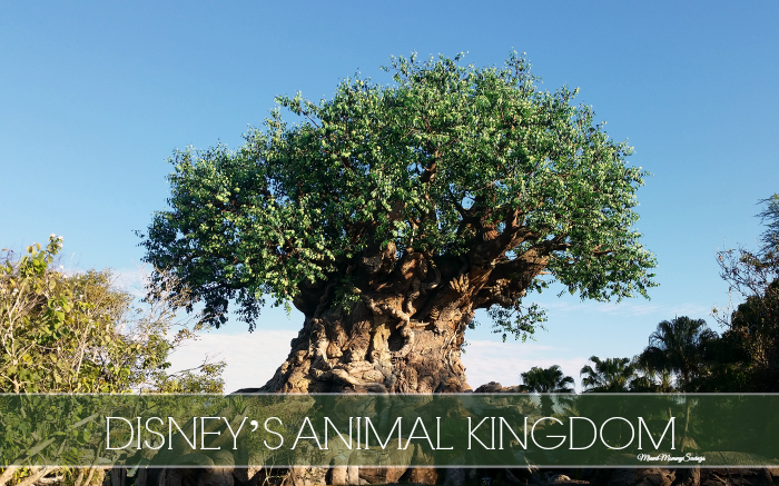 Disney's Animal Kingdom: Preserving Our Wild World in the Heart of Florida!