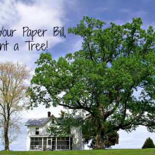 Ditch-Your-Paper-Bill-Plant-a-Tree-Miami-Mommy-Savings